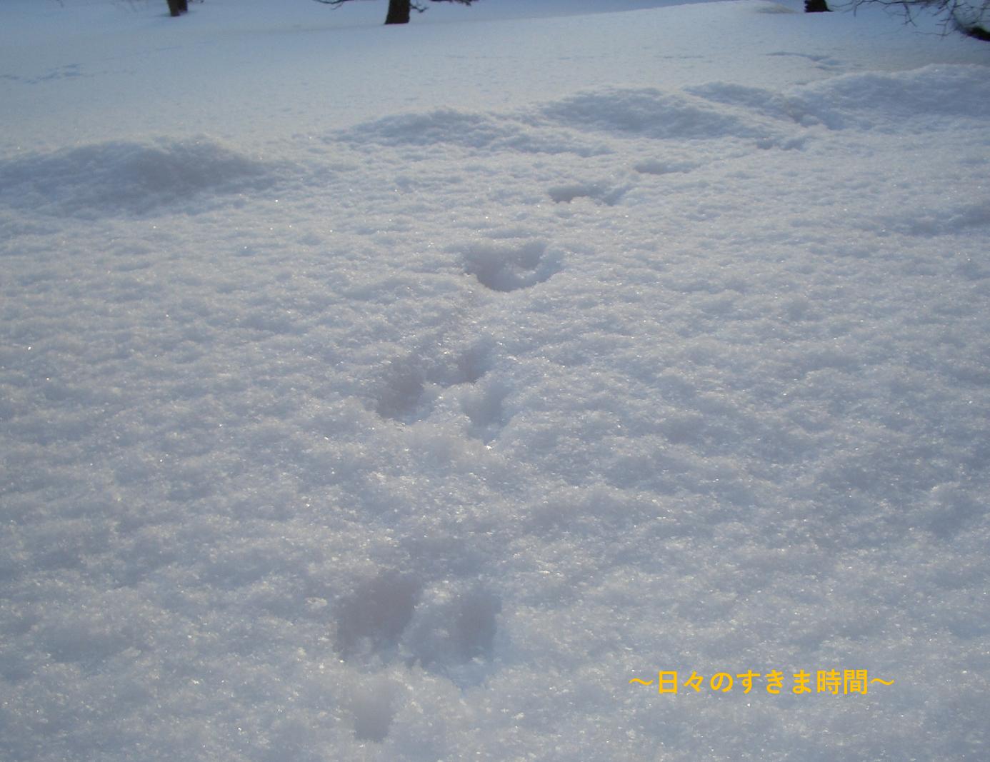 雪に動物の足跡