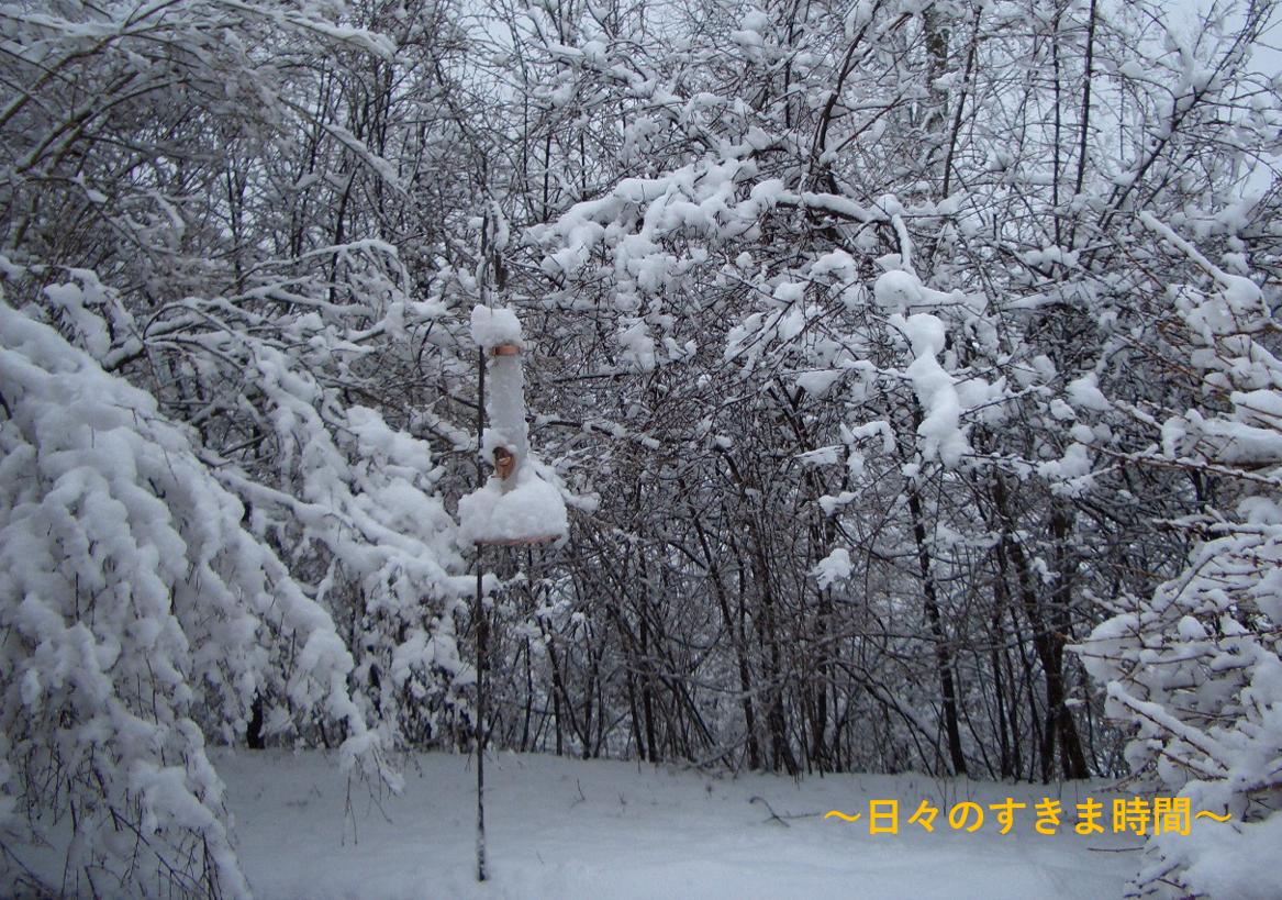 バードフィーダーにも雪
