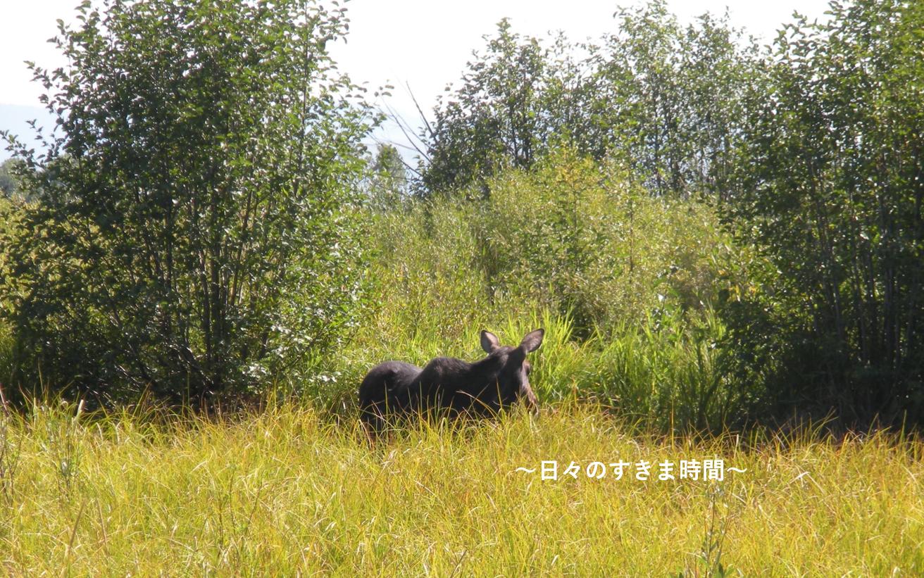 ムースのメス