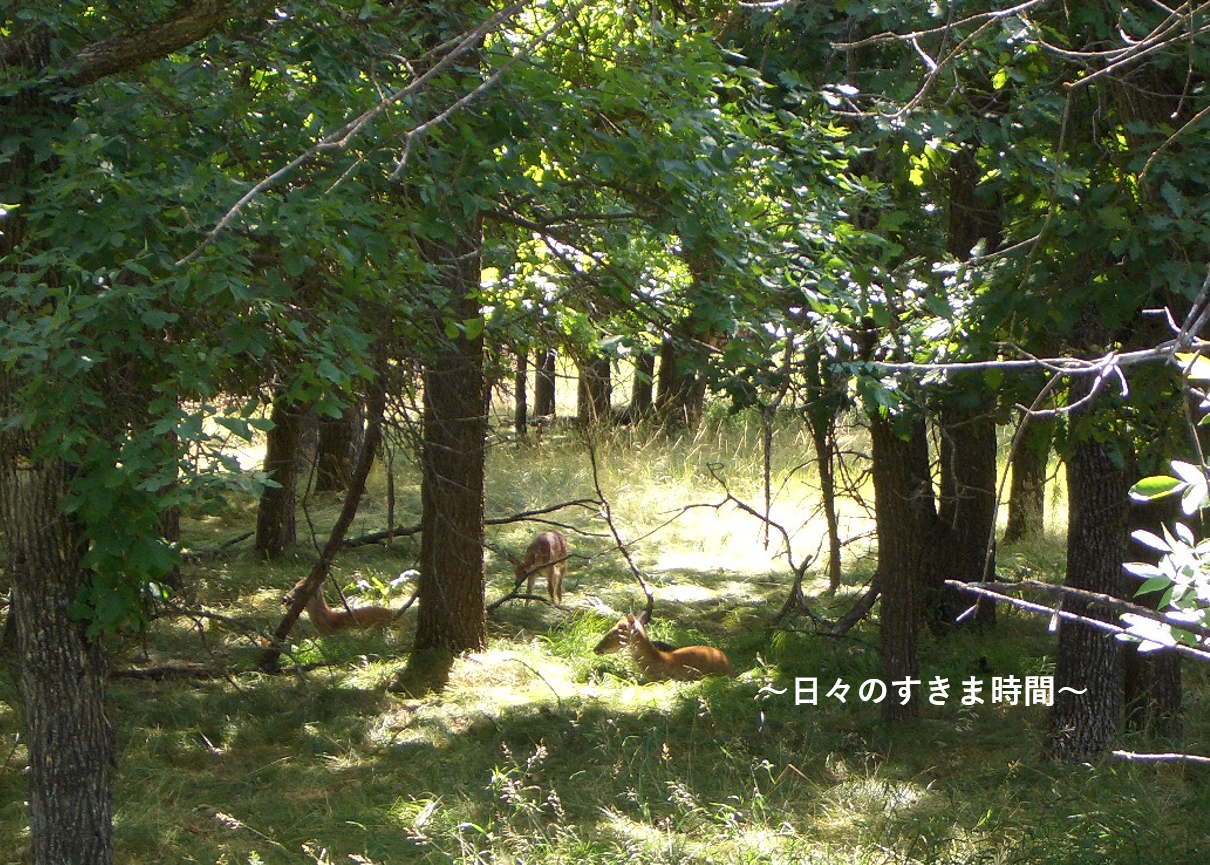 デビルスタワーの鹿